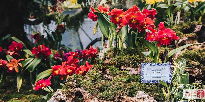 بازار گل و فضای رویداد اصلی